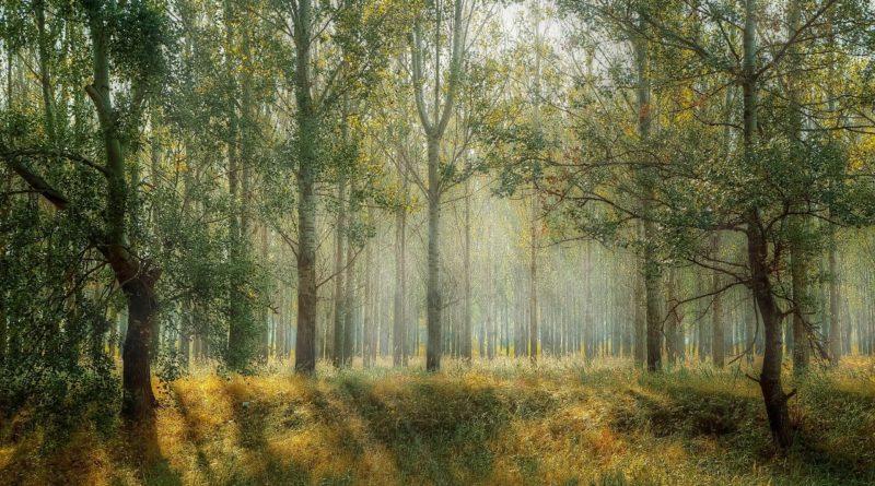 Чудесно дышится в лесу